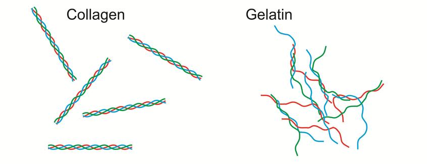 Hydrolyzed Collagen (collagen thủy phân) trong Ms skincal